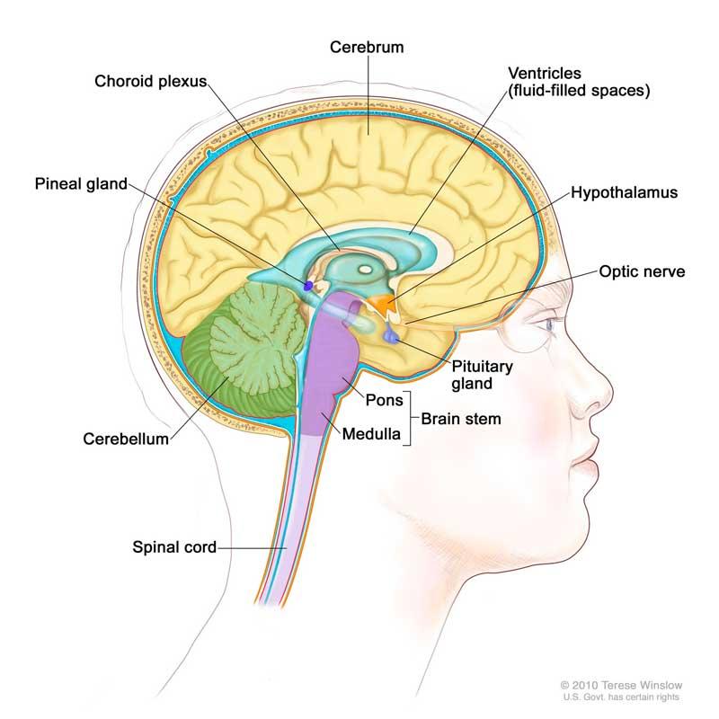 Comunicação telepática e a estrutura do cérebro