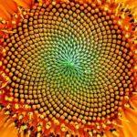 O que a geometria presente na natureza, na música e no corpo tem a nos dizer
